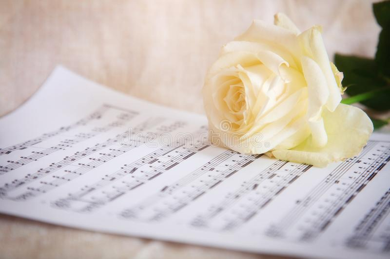 Delicate background with white rose and musical notes. Vintage style stock photos