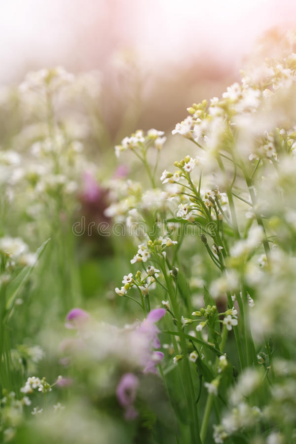 Delicate background with wildflowers. And morning dew with shallow depth and sunshine stock photos