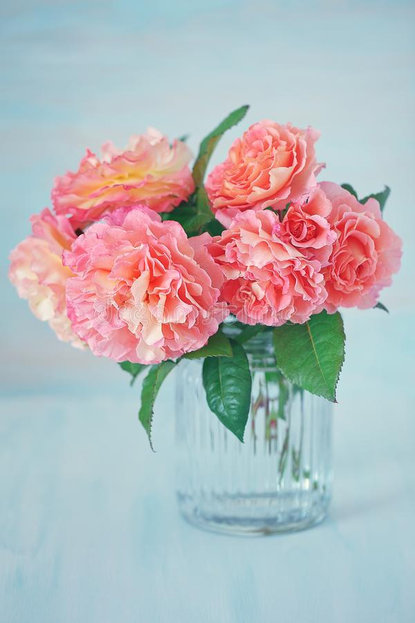 Delicate beautiful roses from a garden . royalty free stock photos