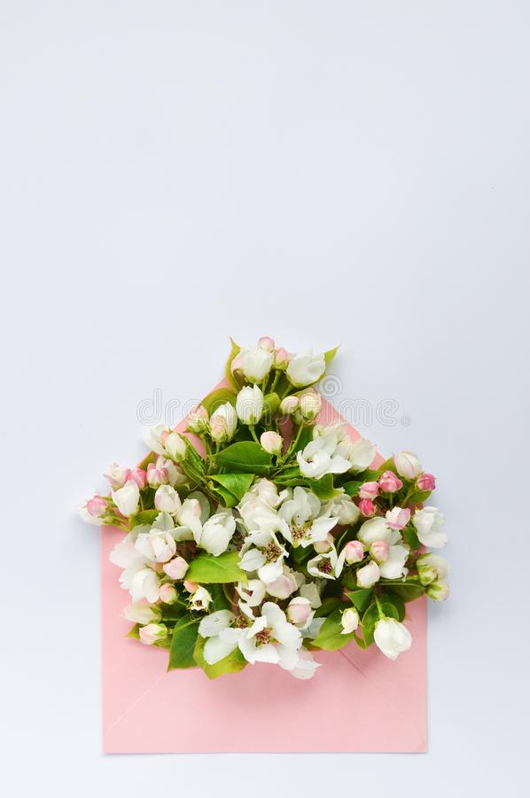 Delicate buds of a flowering Apple tree in a pink paper envelope on a white on a pink background. Flat lay, top view. Delicate buds of a flowering Apple tree in stock photography