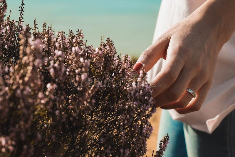A delicate caress to the nature. A woman hand  with a ring making a cute caress to a plant near the beach stock photography