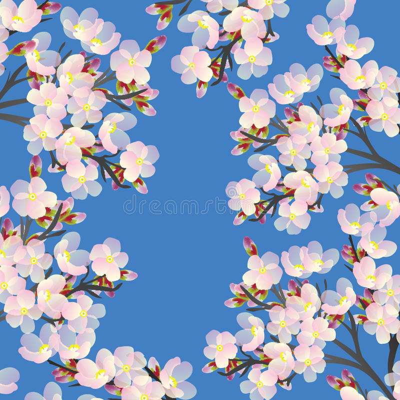 Download Delicate Cherry Flowers Blooming In Spri Stock Image - Image: 13518021