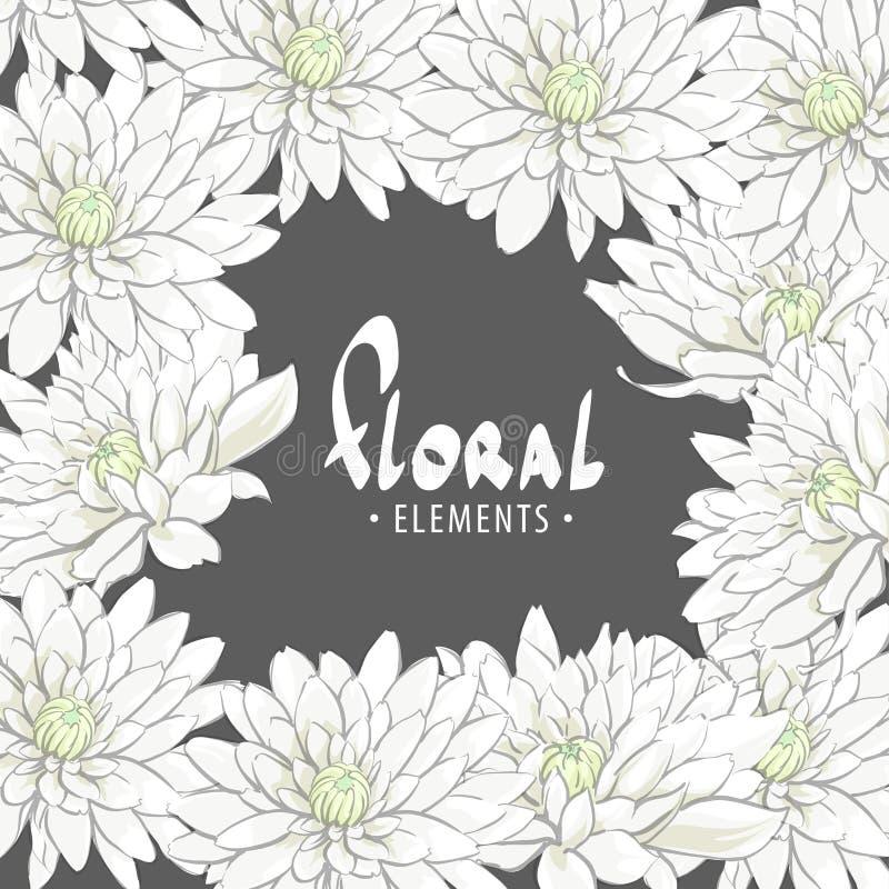 Delicate chrysanthemum flowers stock illustration