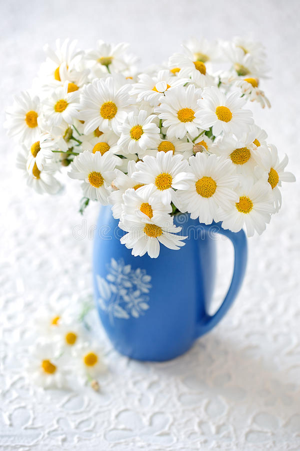 Delicate daisy flowers stock photography