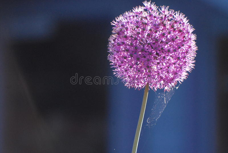 Delicate in Design royalty free stock images