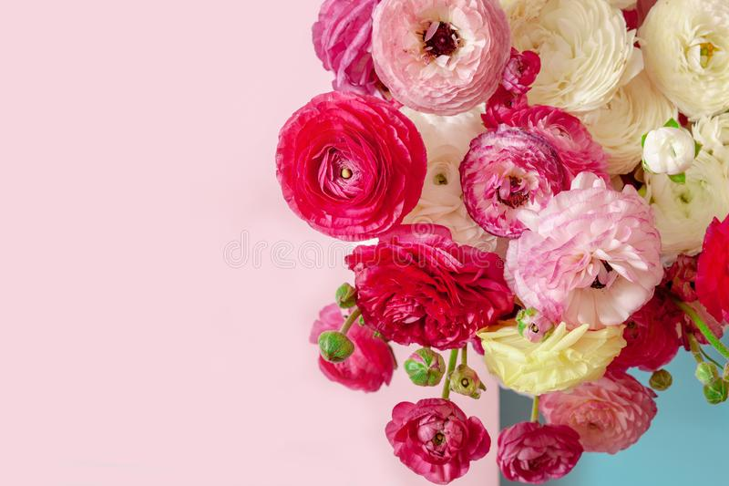 Delicate floral background of pink ranunculus onpink and blue background, romantic background for wedding invitations and greeting stock photography