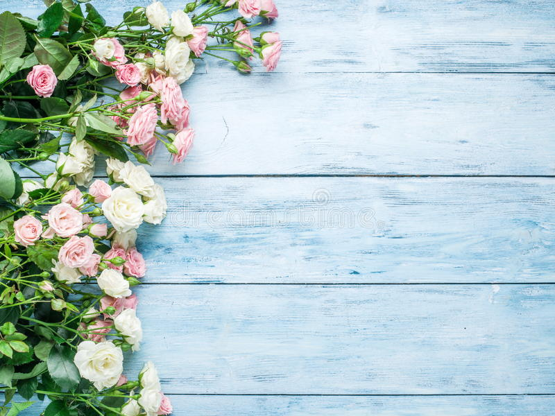 Delicate fresh roses on the blue background. stock photos