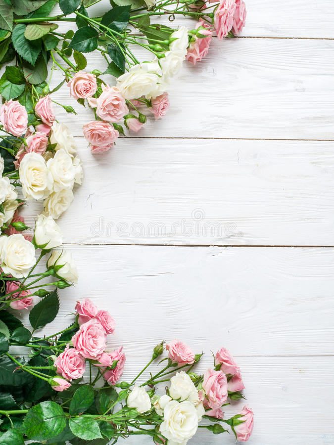 Delicate fresh roses on a white wooden background. stock images