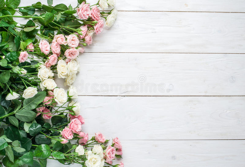 Delicate fresh roses on a white wooden background. stock image