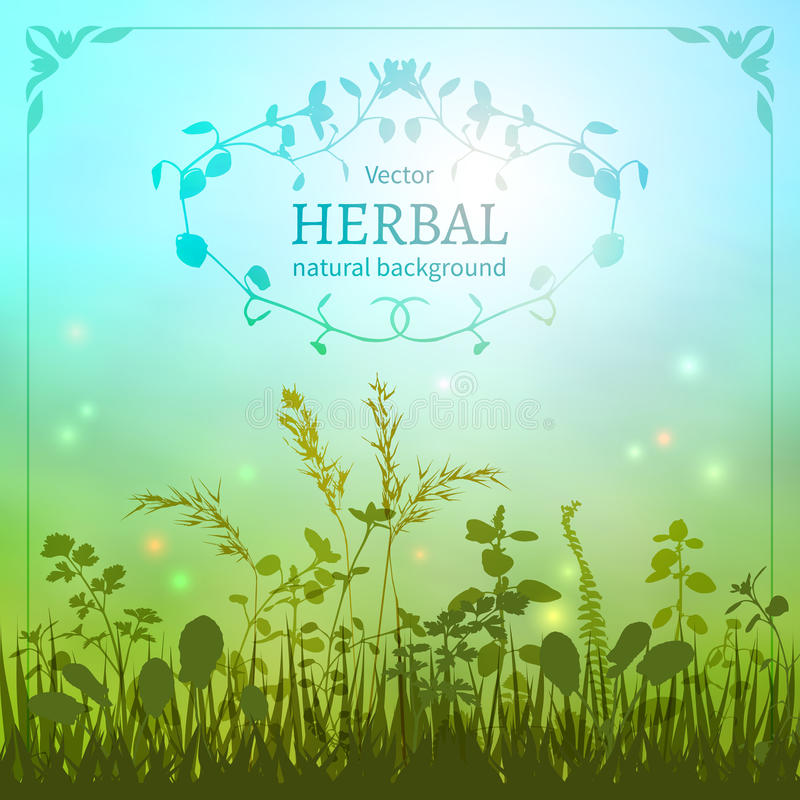 Delicate herbal background. With a silhouette of grasses and fireflies bordered decorative floral border vector illustration