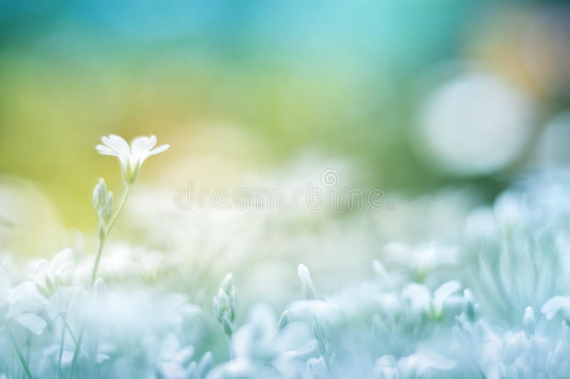 Delicate little white flower on a beautiful background with a gentle tone. Floral background colorful. royalty free stock photos