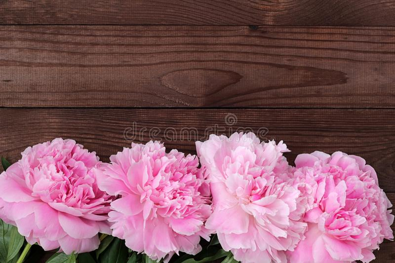 Delicate pink blooming peonies on a rough dark wooden background royalty free stock images