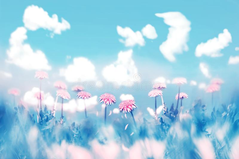 Delicate pink flowers on blue sky background with clouds. Summer spring natural image. Pastel shades.  stock photo