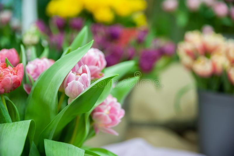 Delicate pink tulips in a bucket surrounded by other flowers. Space for text. Spring theme stock photos