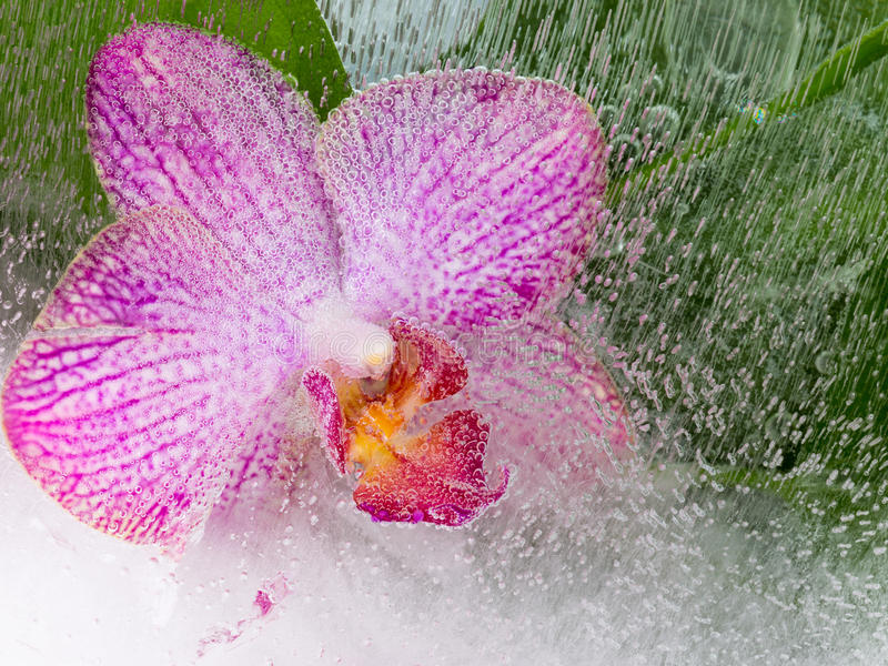 Delicate purple orchid. Abstraction of a beautiful purple orchid in water with bubbles on a green background stock photography