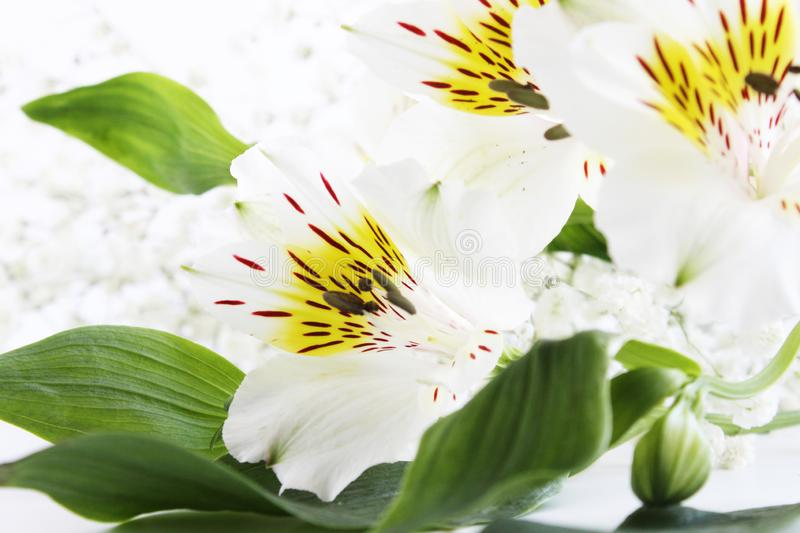 Delicate spring flowers green leaves white background stock images