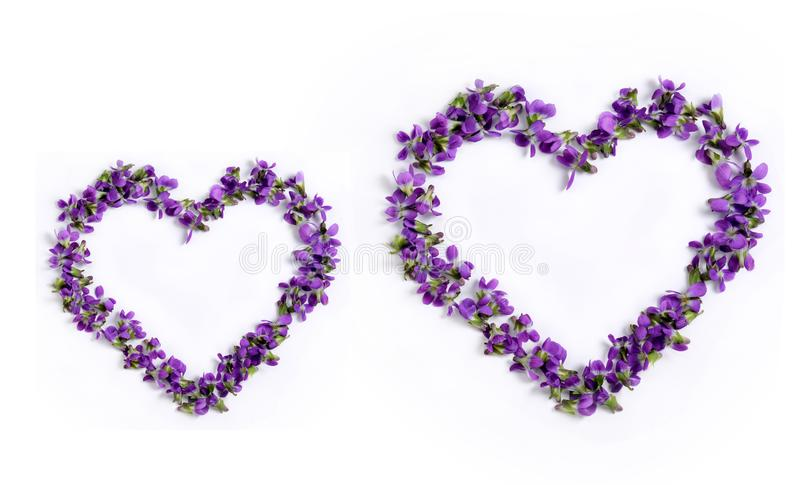 Delicate spring violets in the shape of a heart on a white background close up stock photography