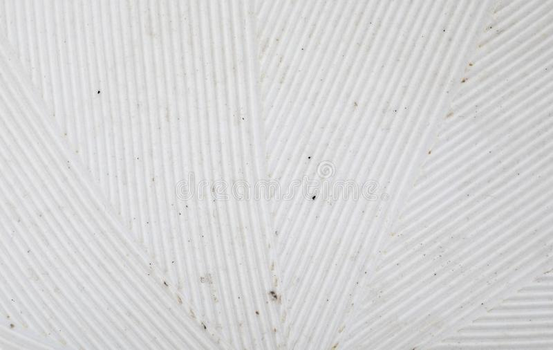 Delicate striped texture stria in white. Close-up of Suribachi and Surikogi Japanese stock images