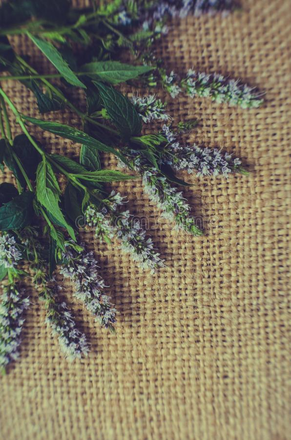 Vintage textural summer background. Old burlap and flowers and mint leaves stock photos