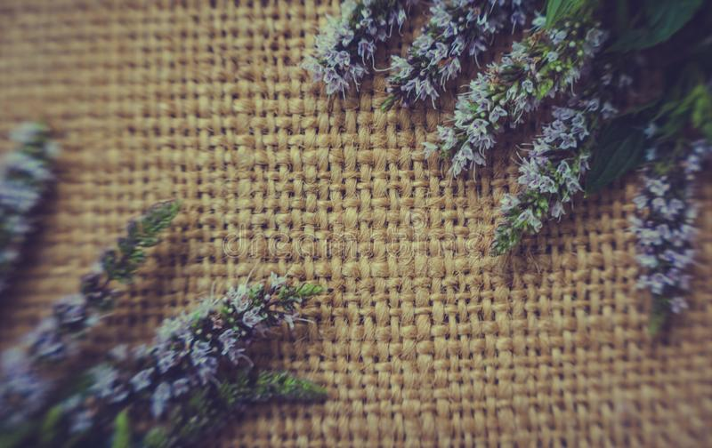 Vintage textural summer background. Old burlap and flowers and mint leaves royalty free stock photo