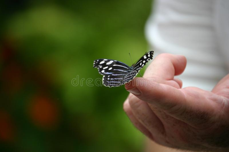 Delicate touch royalty free stock images