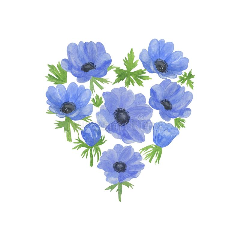 Delicate watercolor blue anemone flower and green leaves floral heart shaped composition. On the white background, simple hand drawn pattern, greeting card royalty free illustration