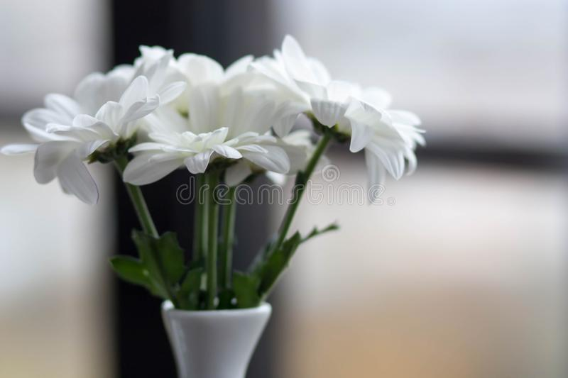 Delicate white flowers in a beautiful simple white porcelain vas download delicate white flowers in a beautiful simple white porcelain vas stock image image of mightylinksfo