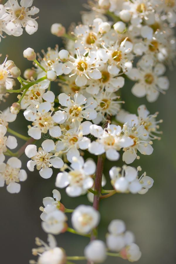 Delicate white flowers with shallow depth of field stock images