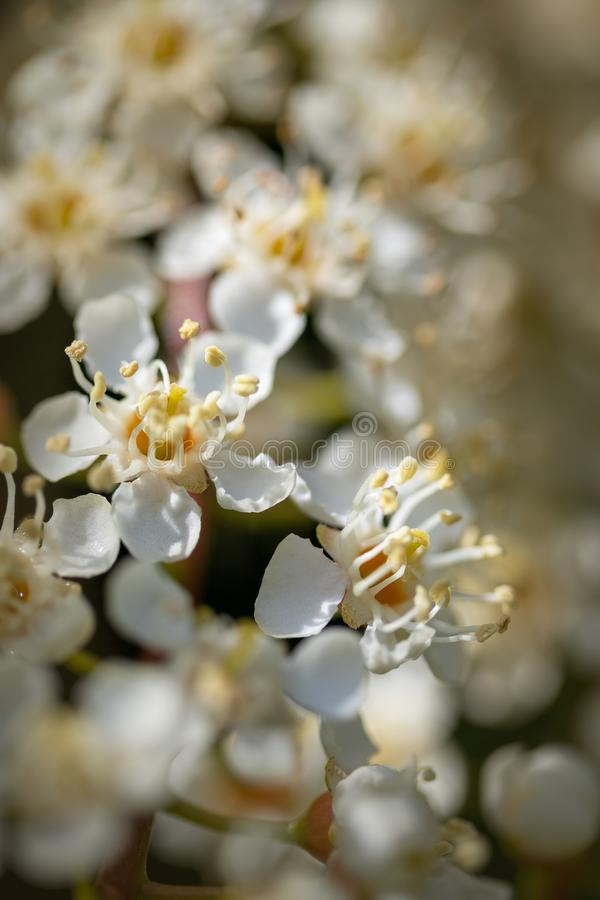 Delicate white flowers with shallow depth of field stock photography