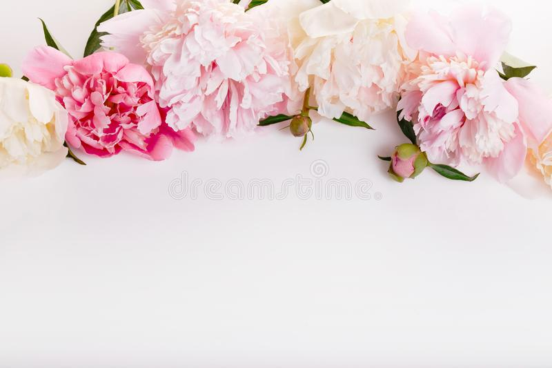 Delicate white pink peony with petals flowers and white ribbon on white. Overhead top view, flat lay. Copy space. Birthday, Mother stock photos
