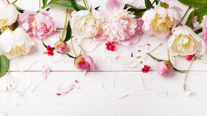 Delicate white pink peony with petals flowers and white ribbon on wooden board. Overhead top view, flat lay. Copy space. Birthday, stock image
