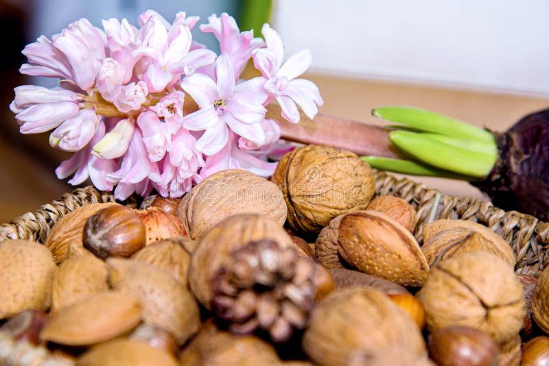 Nut still life . Assortment of dried fruit . Variety of Mixed Nuts royalty free stock photo