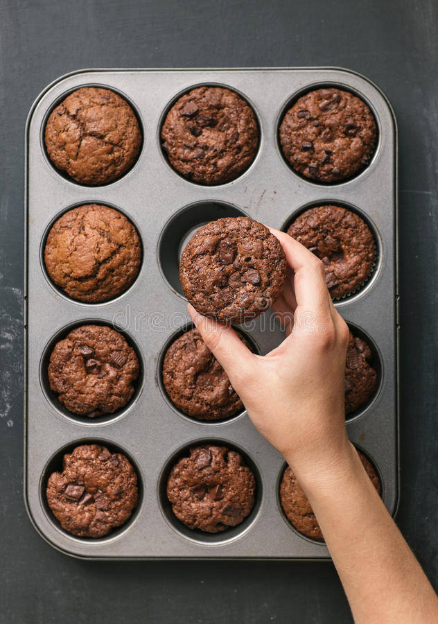 Delicious chocolate chip muffin stock photography