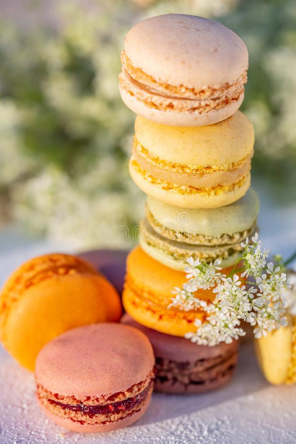 Delicious colored french pastries. Dessert sweets macarons and meadow white flowers. Delicious sweet airy colored french pastries. Dessert sweets macarons and stock image