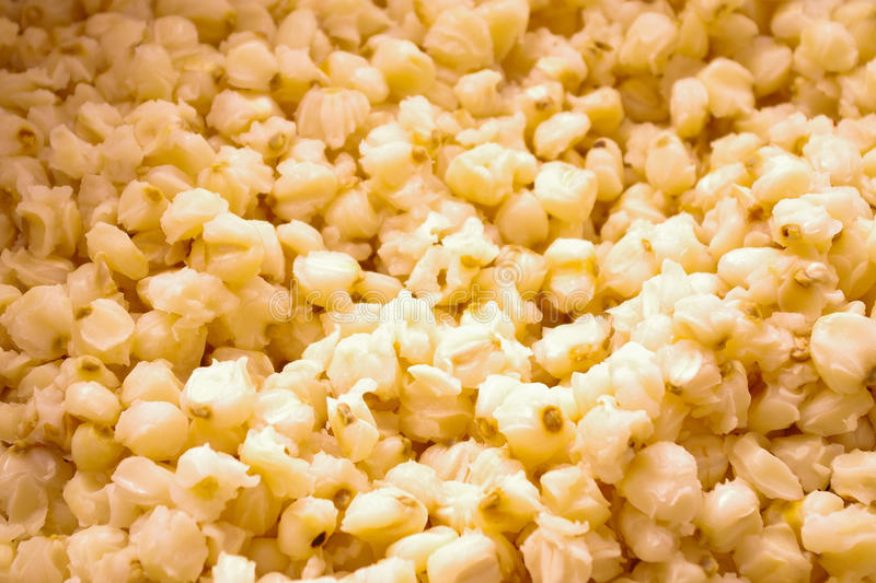 Delicious and cooked white maiz, close up of grains royalty free stock photography