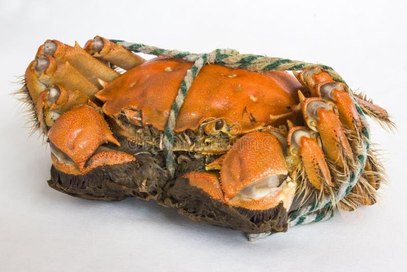 Delicious crab stock image