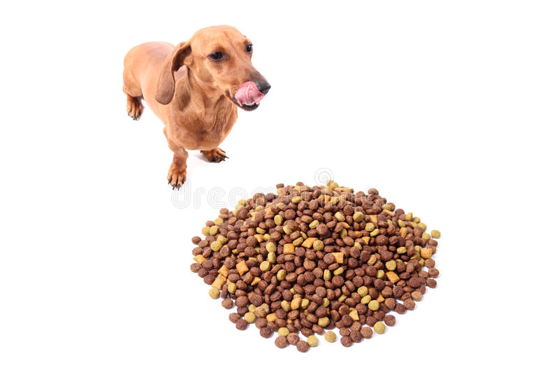Delicious Doog Food Royalty Free Stock Photos Image