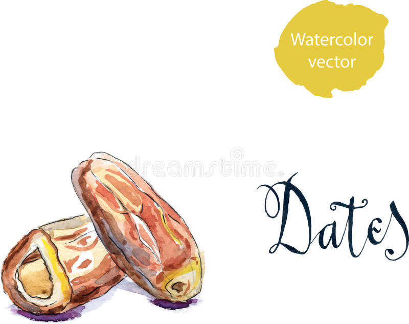 Delicious dried date fruit royalty free illustration