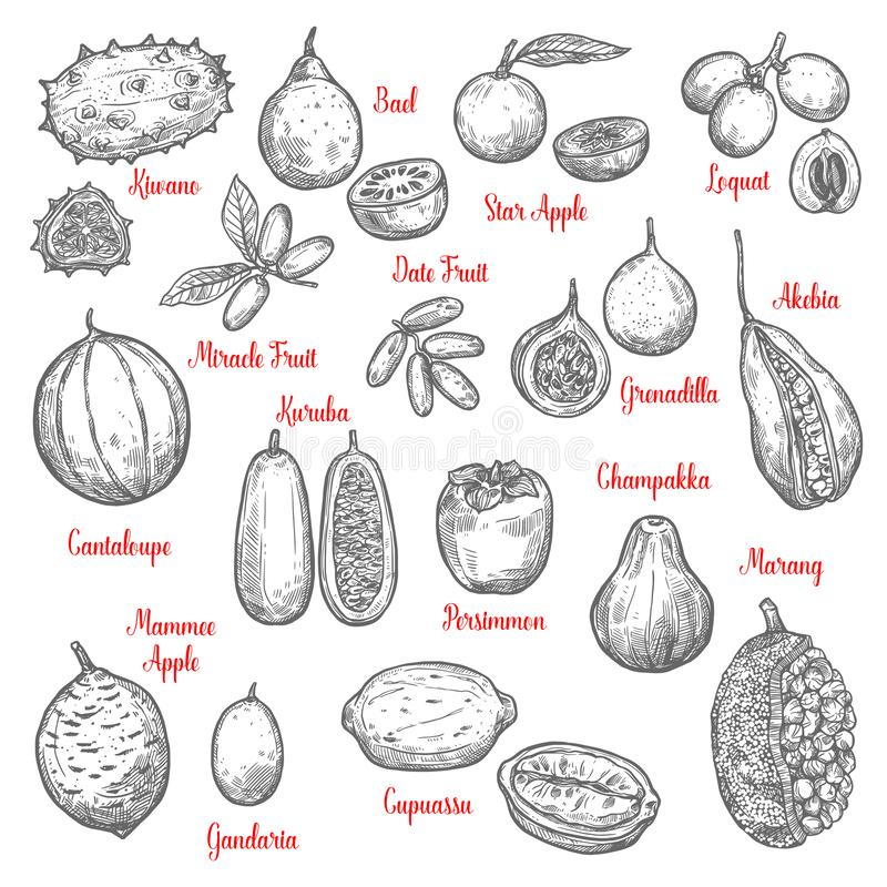 Delicious exotic tropical fruits sketches isolated vector illustration