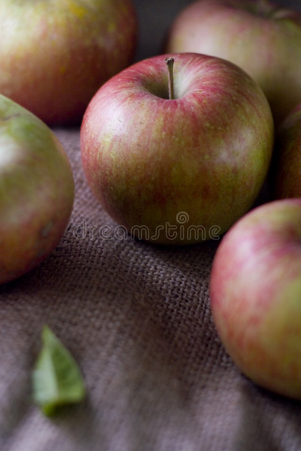 Download Delicious Fresh Red Apples Of Seasonal Stock Photo - Image: 7584962