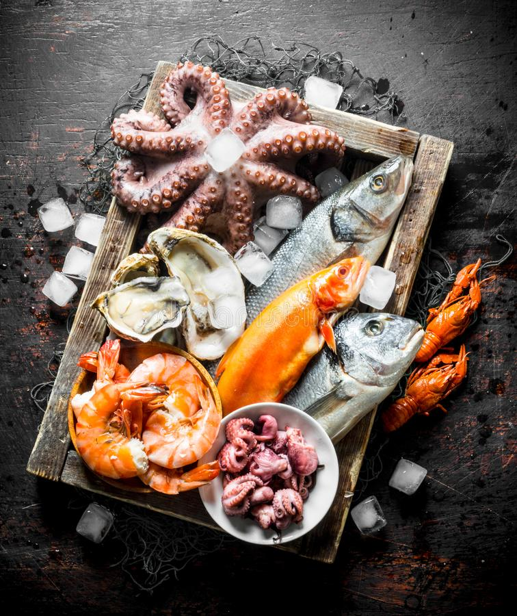 Delicious fresh seafood on a wooden tray with ice. On dark rustic background royalty free stock photos