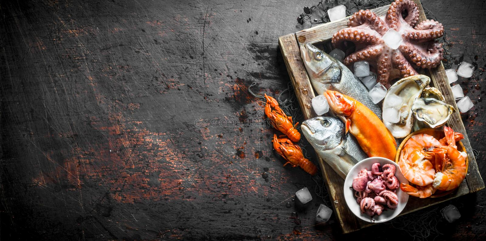 Delicious fresh seafood on a wooden tray with ice. On dark rustic background stock photography