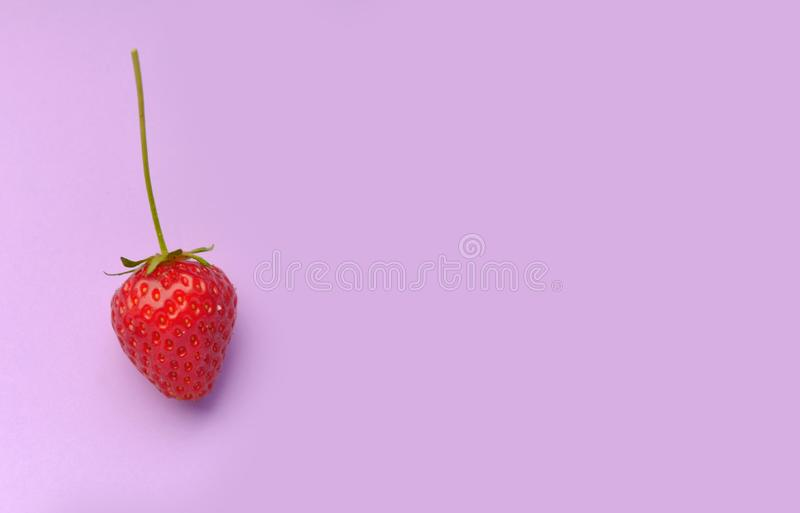 Delicious fresh strawberry with stem on pink background. And copy space ont the right royalty free stock images