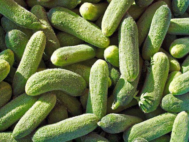 Delicious gherkins at a food market royalty free stock image