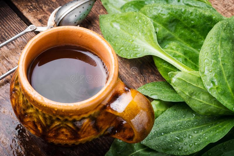 Tea with plantain stock image