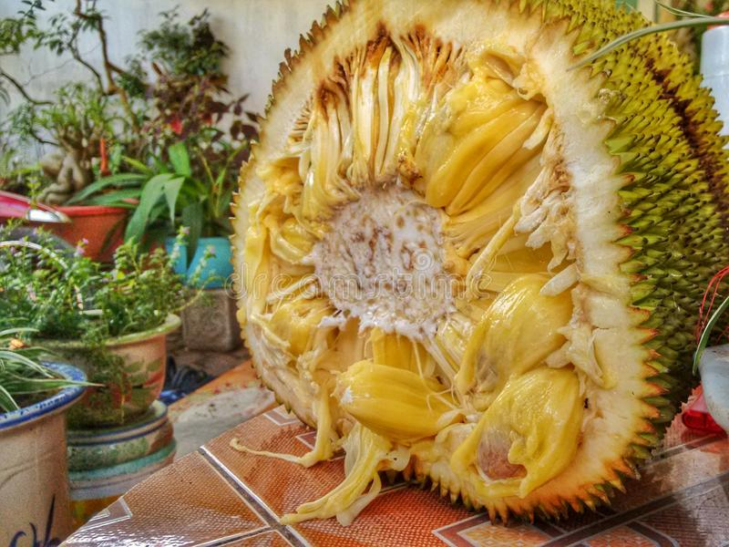 Jackfruit Is Delicious royalty free stock images