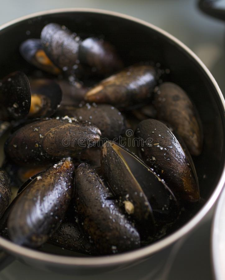 Delicious juicy mussels in a frying pan stock image