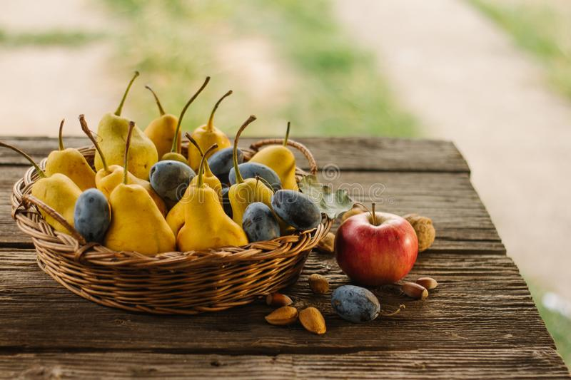 Delicious, ripe, freshly picked pears, plums and a an apple. Delicious, ripe, freshly picked pears, plums and a an apple in a brushwood basket on a rustic stock images