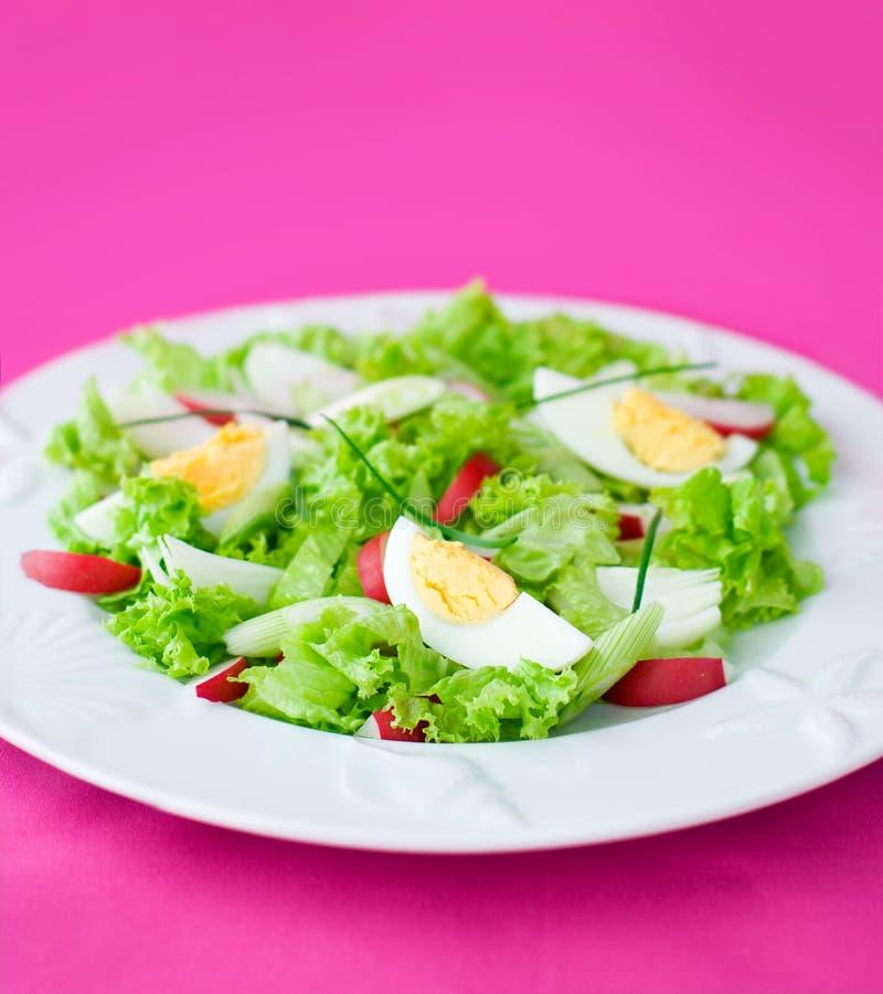 Download Delicious salad stock photo. Image of menu, image, prepared - 9006738