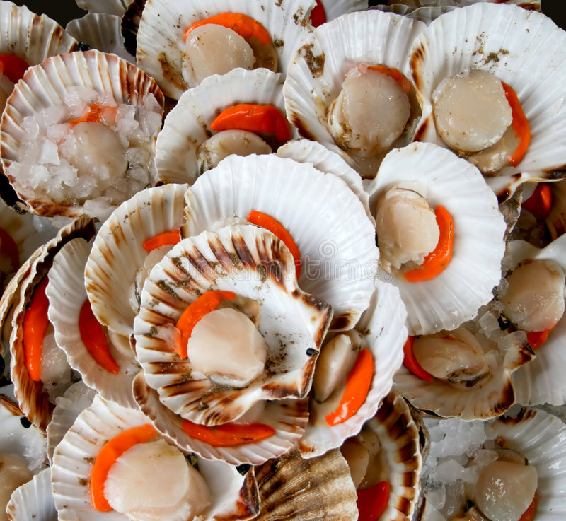 Download Delicious shell stock image. Image of orange, food, cook - 2095883